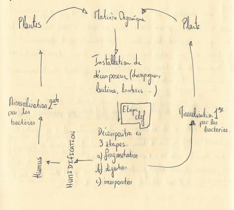 cycle de la M.O 001 (2).jpg